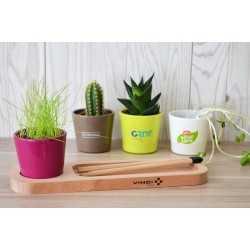 Plante Dépolluante Bureau Pots à Stylos