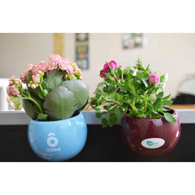 Plante d polluante chambre pot de fleurs publicitaire - Pot de chambre camping ...