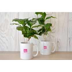 Mug avec Caféier Personnalisé Pot de fleurs publicitaire