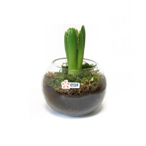 Jachinte en Pot de Verre Pot de fleurs publicitaire